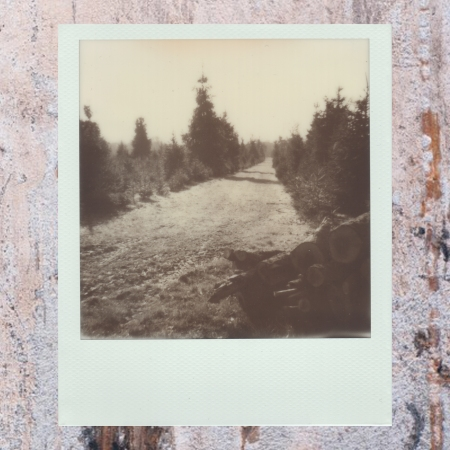 6. Nature's Corridor - Insta.jpg